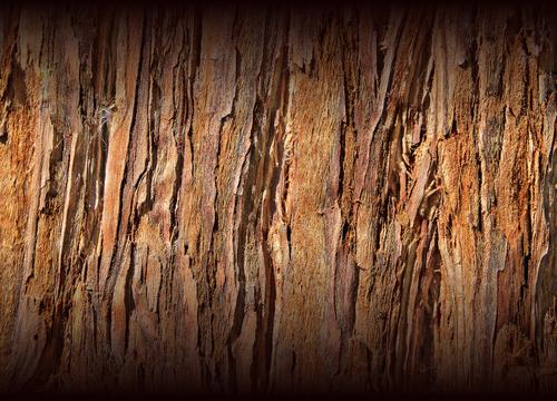 Wood Fades
