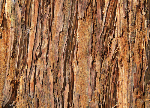 Light Wood Bark