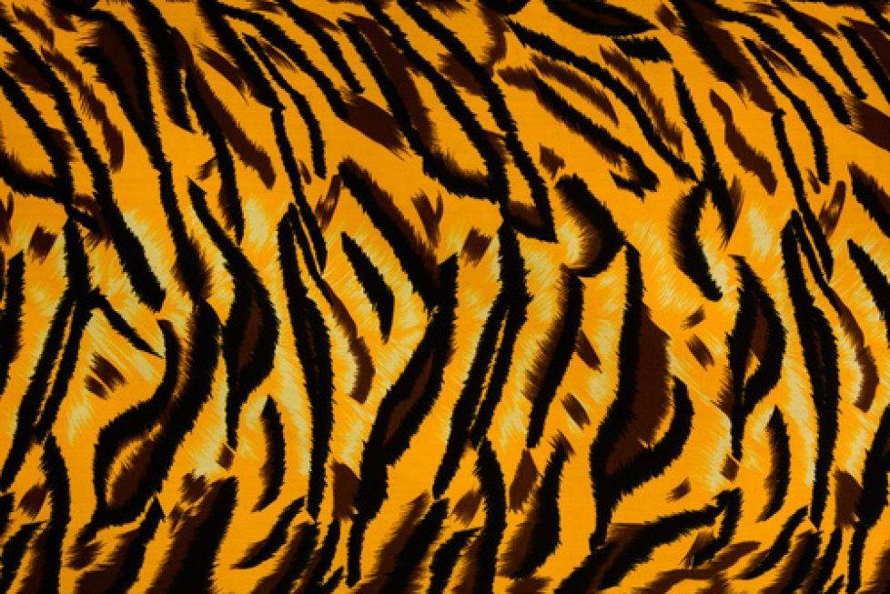 Tiger Skin Drum Wrap Design