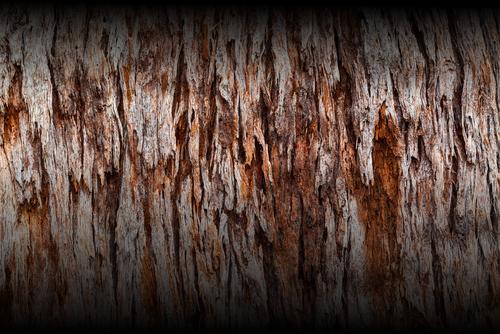 Wood Bark Fade